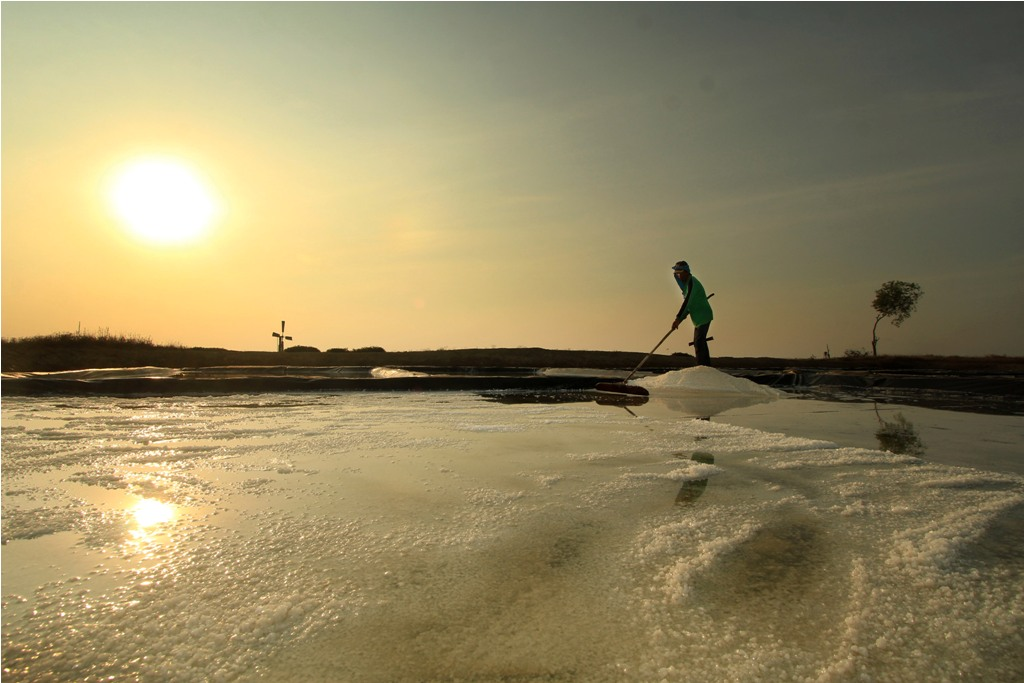 Pekerja mengumpulkan garam saat panen di desa Cilet, Kandanghaur, Indramayu, Jawa Barat, Kamis (6/8). Untuk membatasi impor garam, Kementerian Kelautan dan Perikanan mengupayakan swasembada garam sebanyak 1,4 juta ton dan memproduksi garam industri sebanyak satu juta ton untuk substitusi impor sebesar 50 persen. ANTARA FOTO/Dedhez Anggara/15