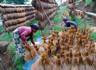 Warga menjemur padi ikat di Kasepuhan Adat Ciptagelar kabupaten Sukabumi, Jawa Barat. Masyarakat adat Ciptagelar menggunakan pola pertanian dengan sistem perbintangan untuk menghasilkan padi unggul dan berlimpah. ANTARA FOTO/Agus Bebeng