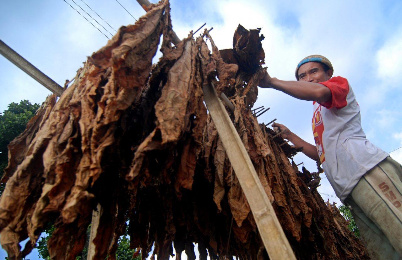 Warga menjemur daun tembakau non rajang di Wekas, Magelang, Jawa Tengah, Jumat (21/8). Daun tembakau non rajang yang dijual sebagai bahan pembuatan cerutu tersebut berharga Rp9.000 per kilogram di tingkat petani. Antara Foto/Aditya Pradana Putra/nz/15.