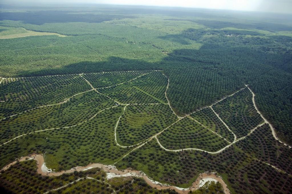 Hamparan tanaman kelapa sawit terlihat dari udara di Provinsi Riau. ANTARA FOTO/ FB Anggoro