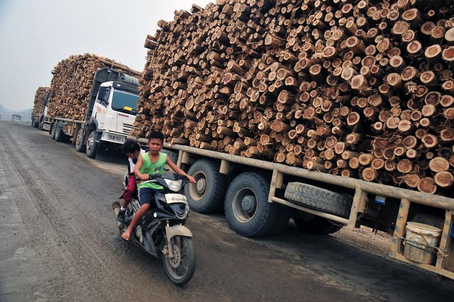 Sejumlah warga melintasi truk pengangkut kayu akasia di Kabupaten Pelalawan, Riau, Selasa (13/10). Pemerintahan Presiden Joko Widodo mengeluarkan paket kebijakan ekonomi jilid dua yang memangkas izin untuk keperluan investasi dan produktif sektor kehutanan akan berlangsung lebih cepat dari 14 izin menjadi enam izin. ANTARA FOTO/FB Anggoro