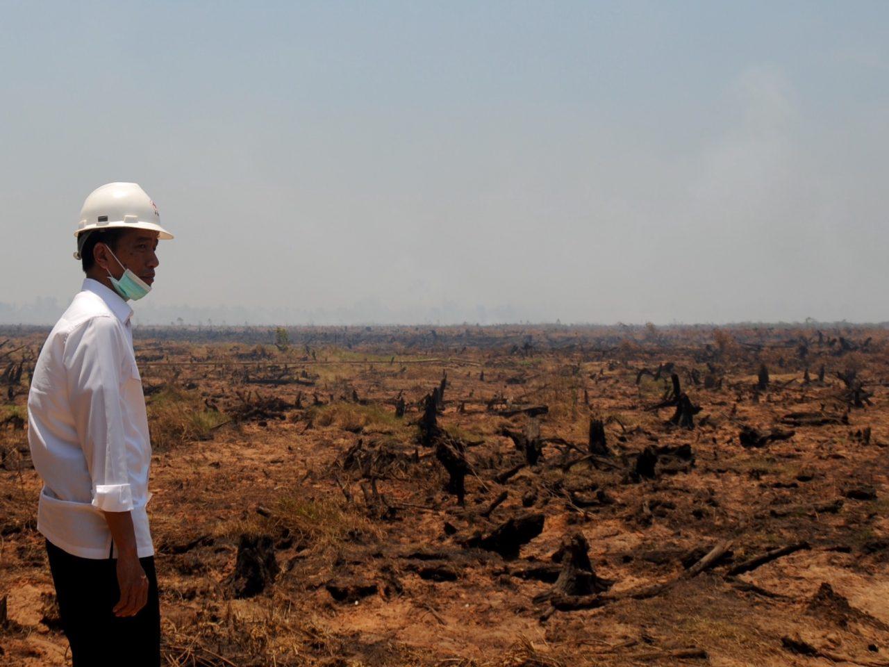 Presiden Joko Widodo meninjau langsung lokasi kebakaran hutan./setkab.go.id