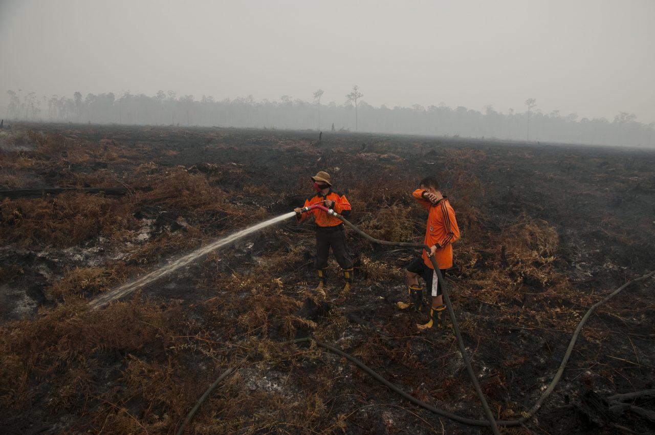 Seorang personel pemadam kebakaran Manggala Agni memadamkan kebakaran di hutan Kawasan Suaka Margasatwa Kerumutan, Kabupaten Pelalawan, Riau, Rabu (28/10). Kementerian Lingkungan Hidup dan Kehutanan menyatakan luas kebakaran lahan dan hutan pada tahun ini sudah lebih dari 1,7 juta hektare di Sumatera dan Kalimantan yang menyebabkan kabut asap berkepanjangan selama tiga bulan terakhir. ANTARA FOTO/FB Anggoro/pras/15.