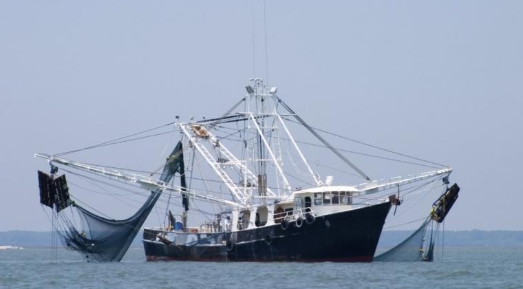 Ilutrasi. Kapal Trawl. bluetraker.com