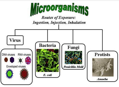 Jenis mikroorganisme yang sering menyebabkan penyakit