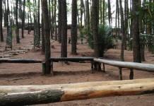 hutan pinus Hutan_pinus_geotimes
