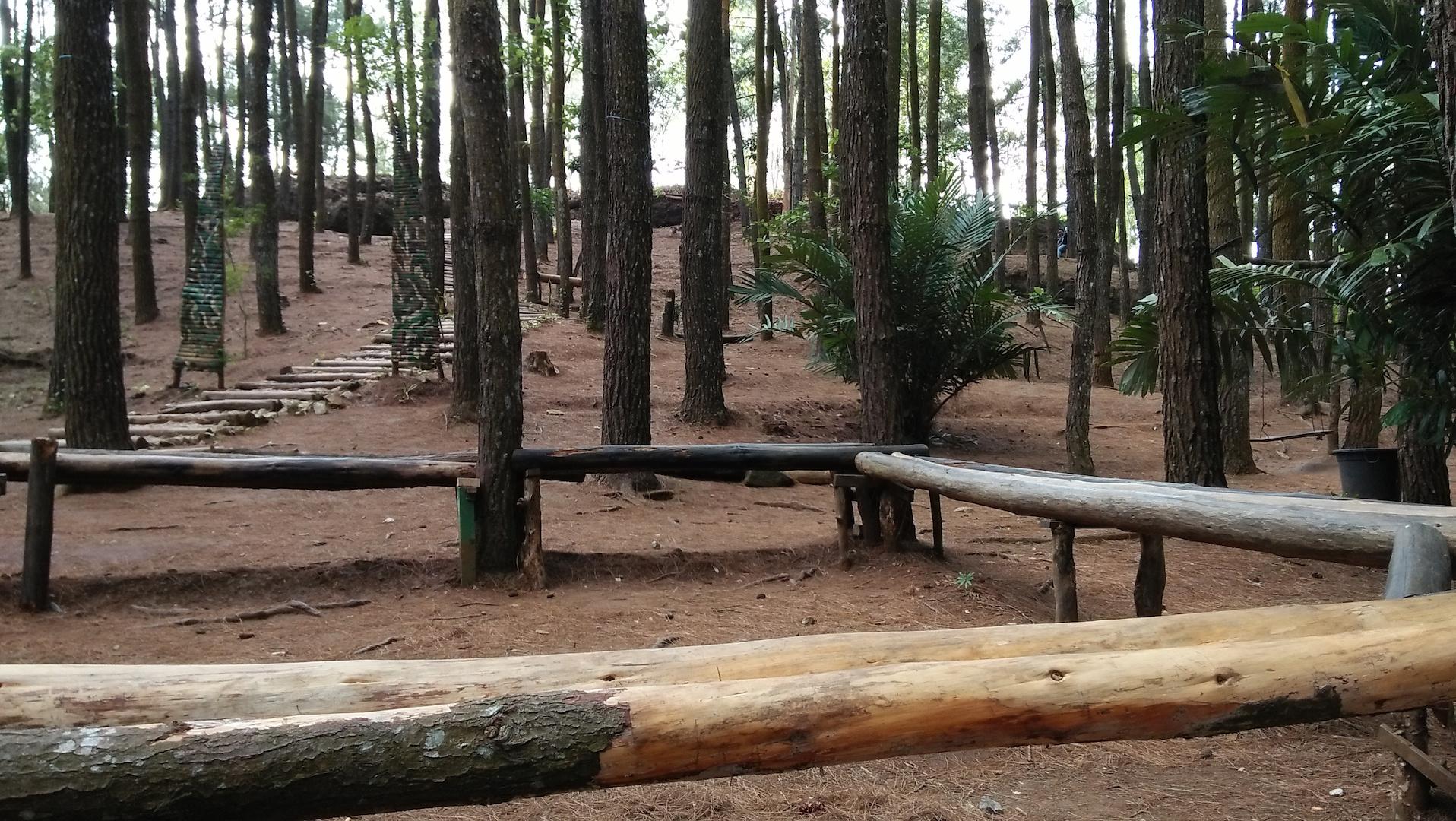 Hutan Pinus: Folk Orang Kota, Bencana Orang Desa | GEOTIMES